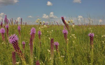 Prairie Remnants, Restorations & Reconstructions