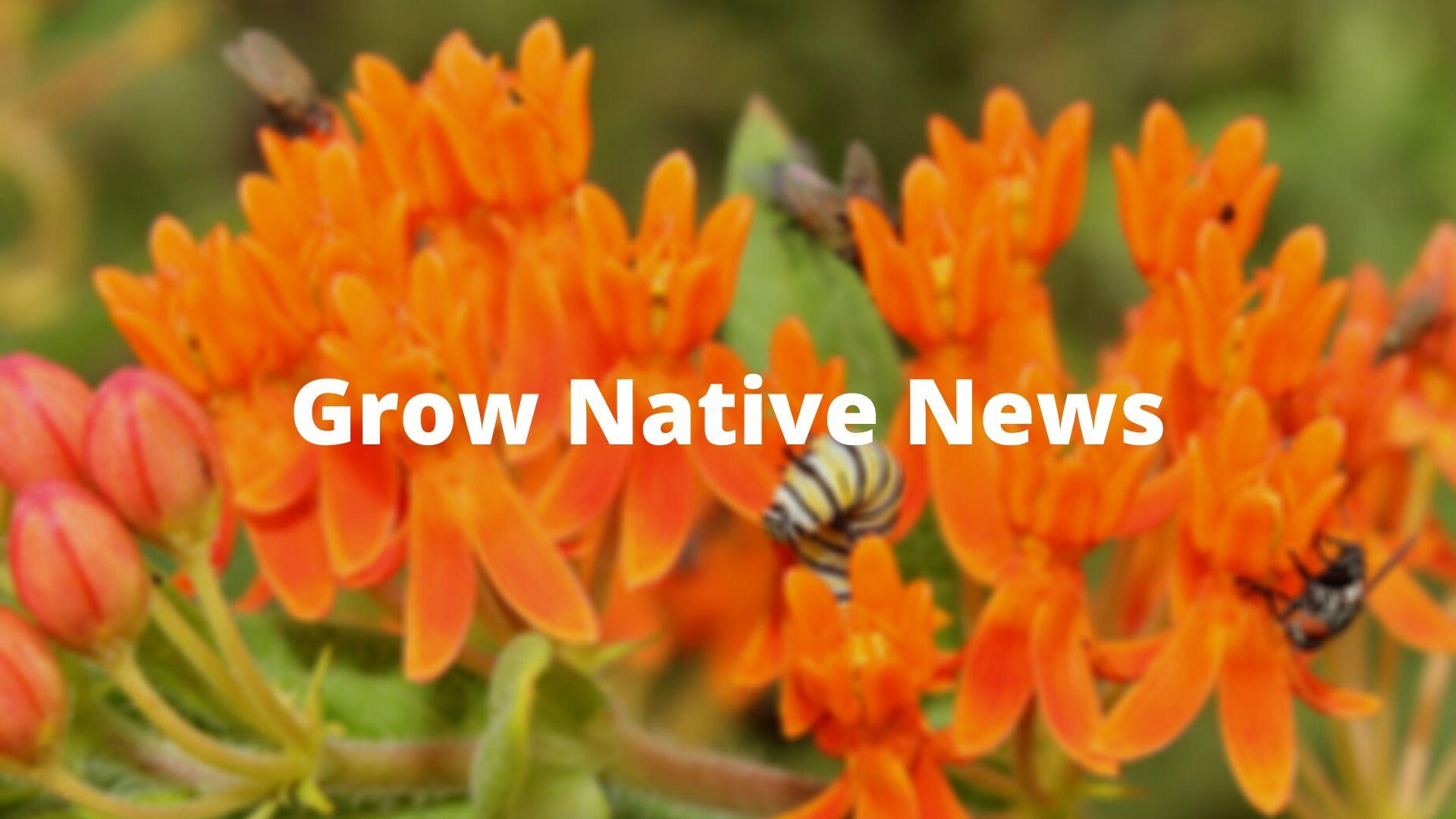 GN News