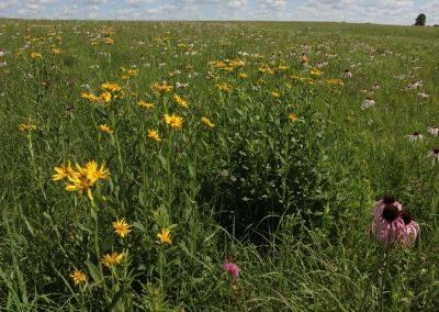 Gayfeather Prairie