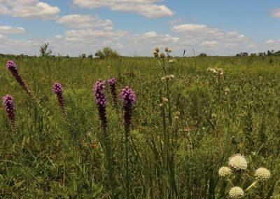 Lattner Prairie