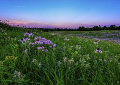 Linden's Prairie