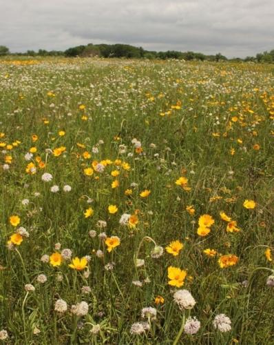 Wildflowers blooming in Noah Brown's Prairie