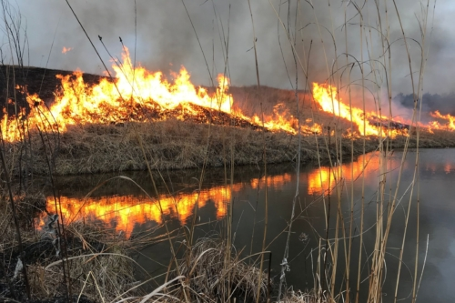 Prescribed burn by the Runge Prairie pond