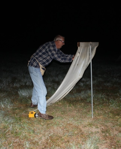 Rae Letsinger collecting moths on a sheet at night