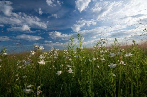 white flowers in green field