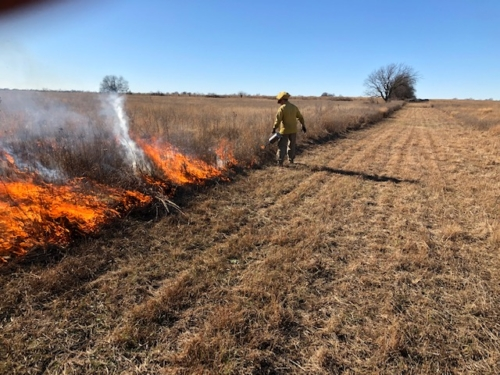 prescribed burn at pleasant run creek prairie