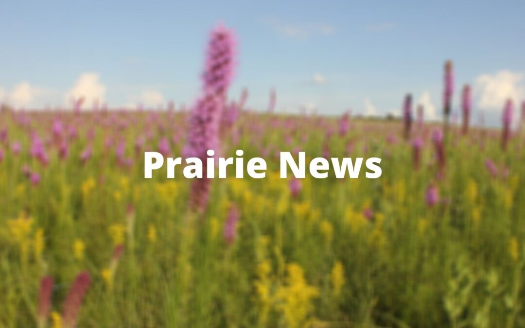 Position Opening: Missouri Prairie Foundation and Grow Native! Administrative & Outreach Assistant