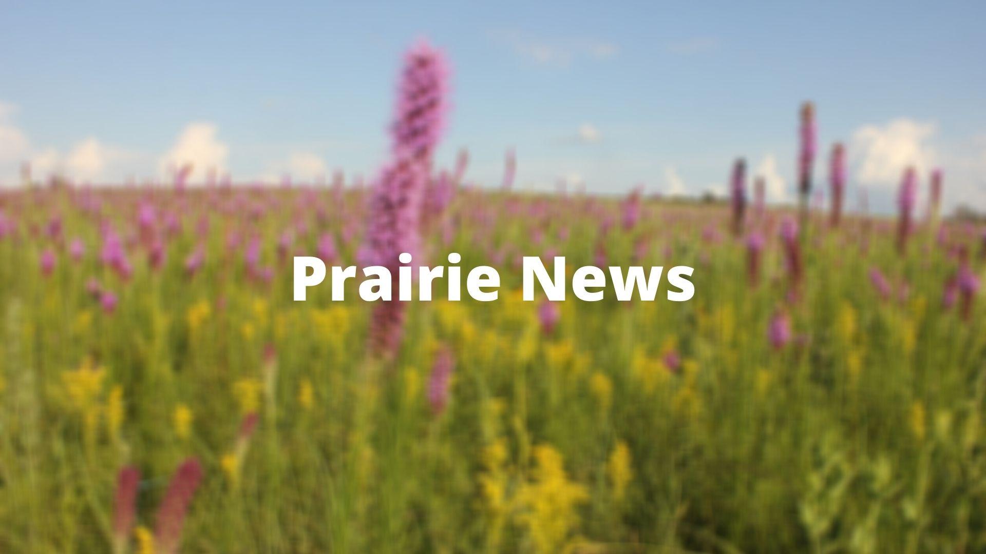 prairie full of blazing stars