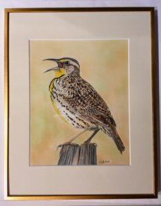 Meadowlark drawing by Katherine Fratti