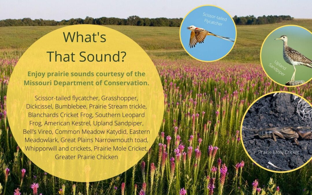 Missouri Prairie Sounds