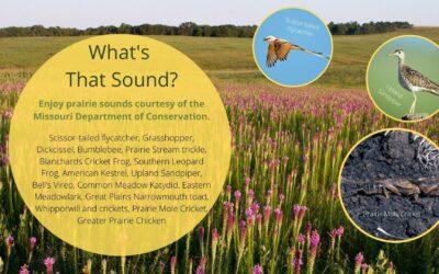 Missouri Prairie Sounds