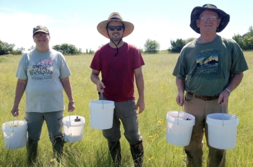 three volunteers in a sunny field with buckets collecting seeds