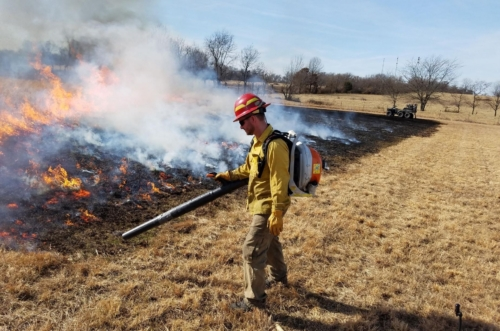 Conducting a prescribed burn at Carver Prairie