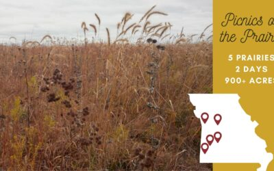 Snapshots from Late Fall Prairie Picnics