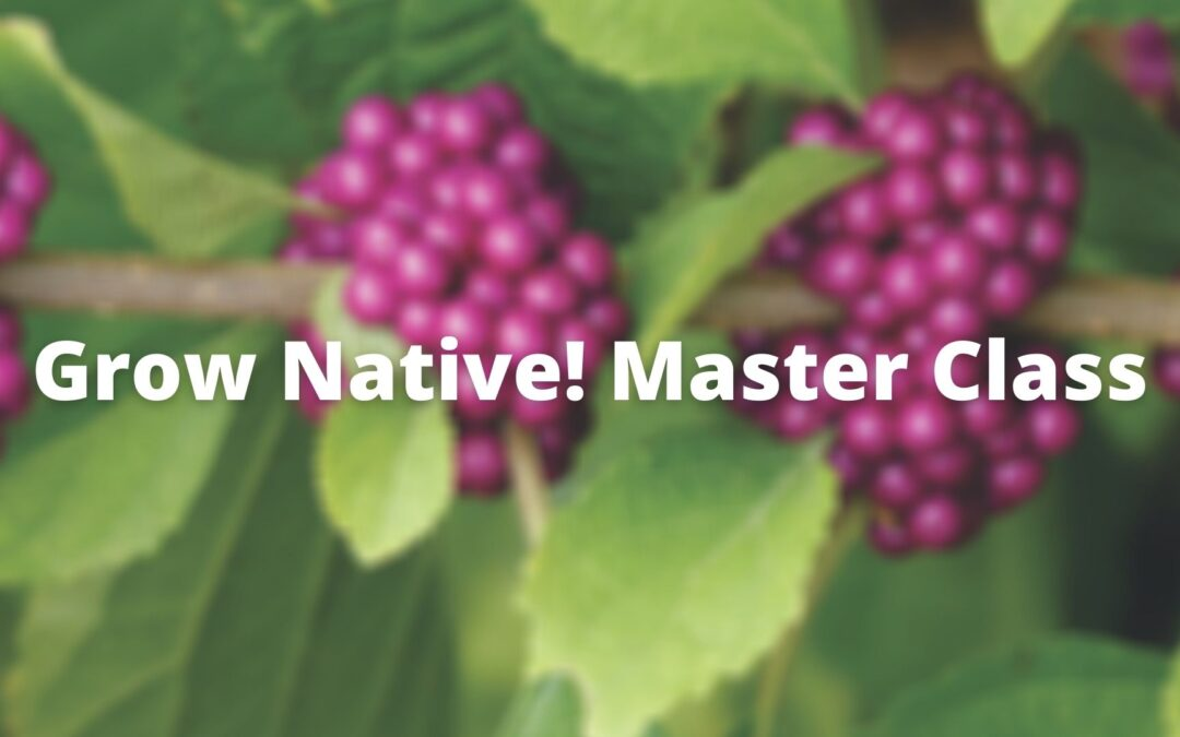 Grow Native! Master Class: Native Shrubs of the Lower Midwest with Alan Branhagen