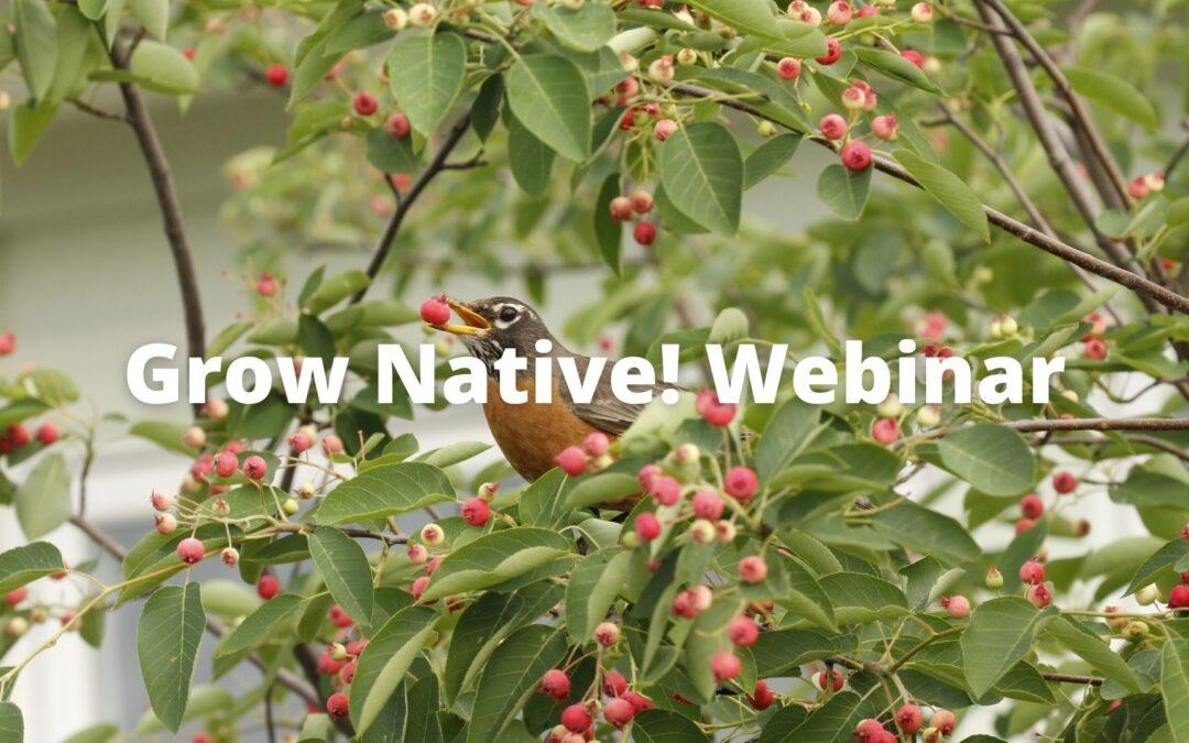 Grow Native! Webinar: Build Your Own Bird Sanctuary with Mitch Leachman