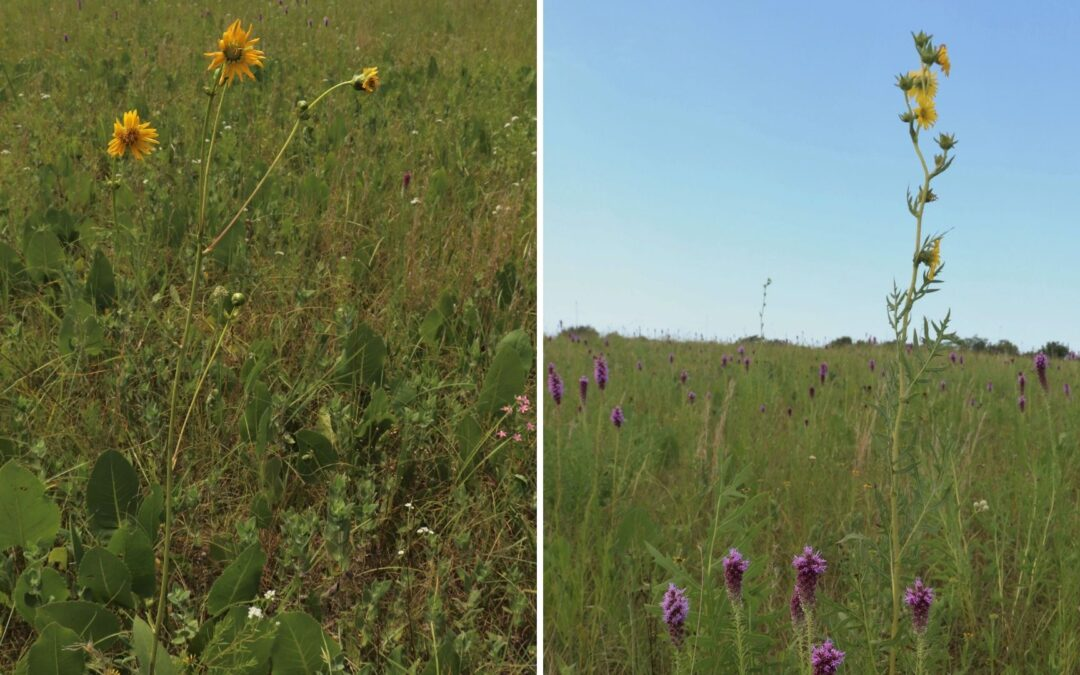 Another Prairie Saved by MPF