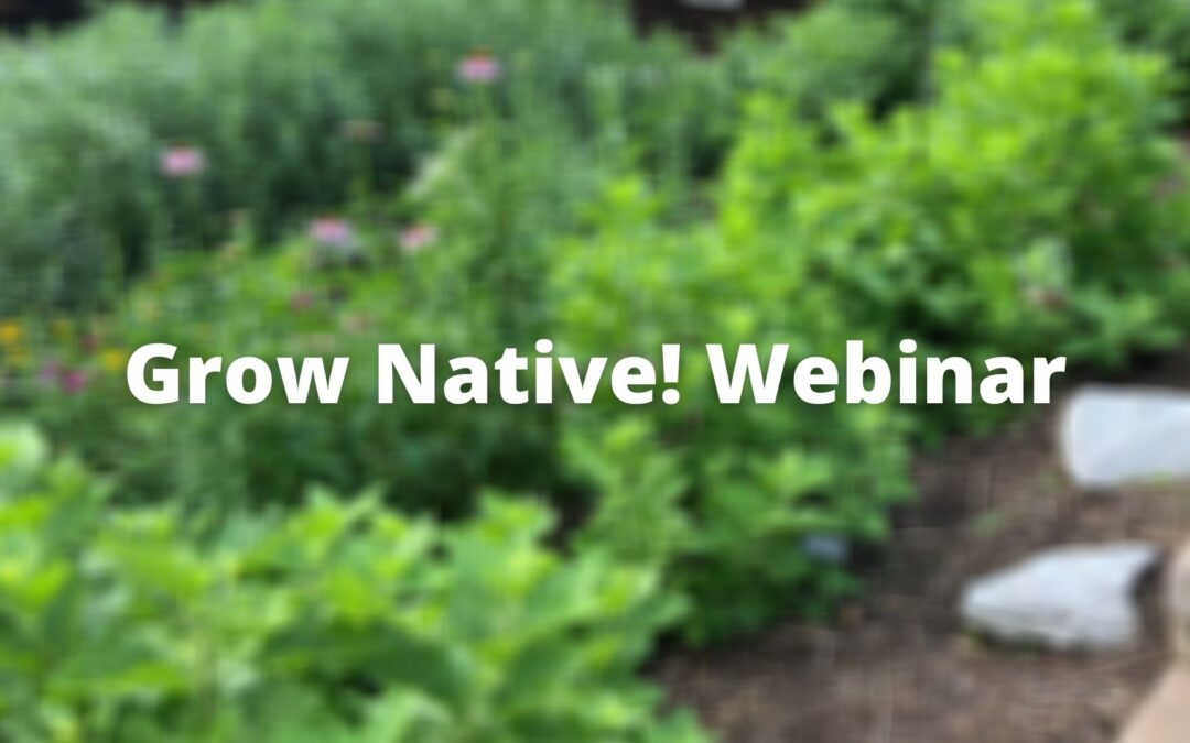 Grow Native! Webinar: Designing with Native Plants with Ronda Burnett