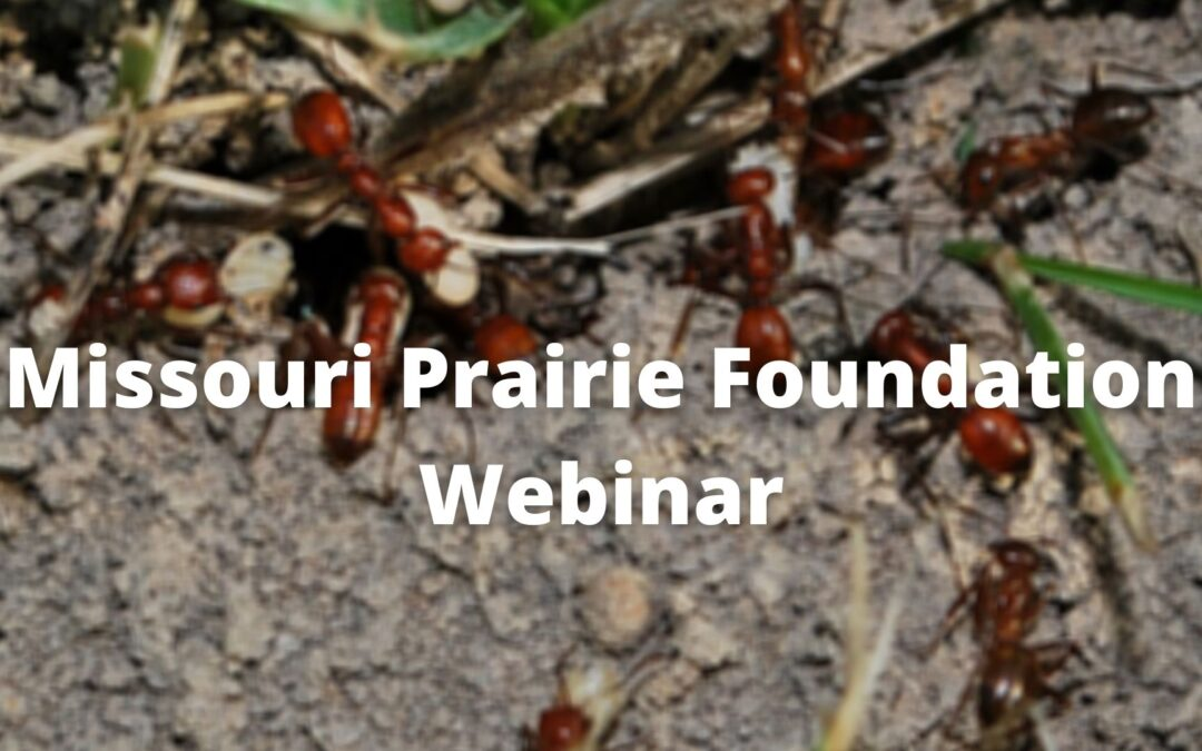MPF Webinar: Notes from Underground: Ants in the Prairie with Dr. James Trager