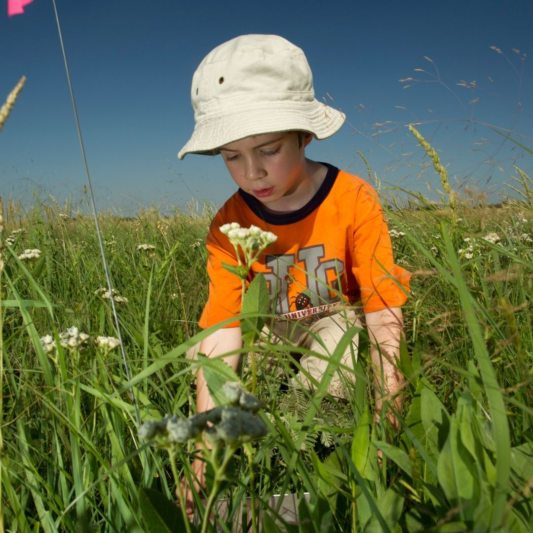 Young boy in an orange shirt and bucket hat places a marker flag in the prairie during a bio blitz event