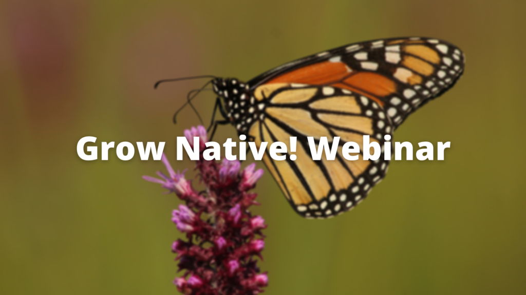 Grow Native! Webinar: Monarch Population Trends, Conservation & Climate Change