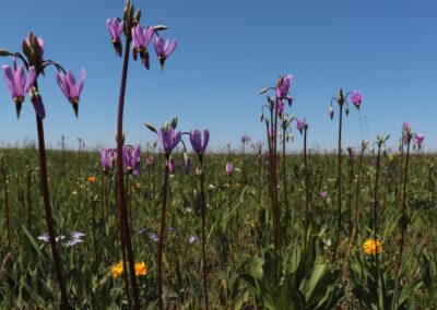 Schuette Prairie