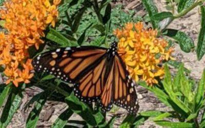 Call for MPF Prairie Garden Grant Applications