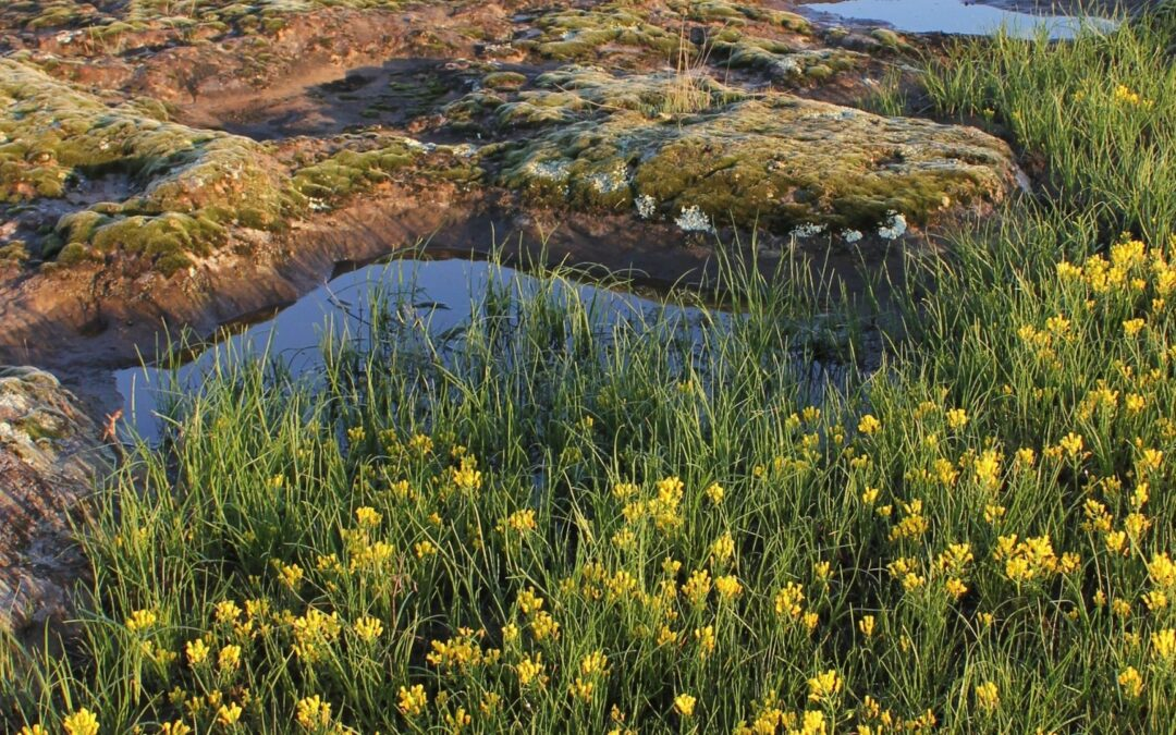 MPF 2021 Geology and Native Grasslands Tours