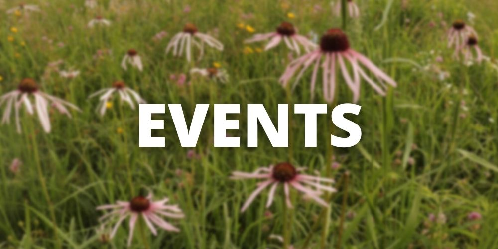 """Button for """"Events"""" with blurred coneflowers in the backgroun"""