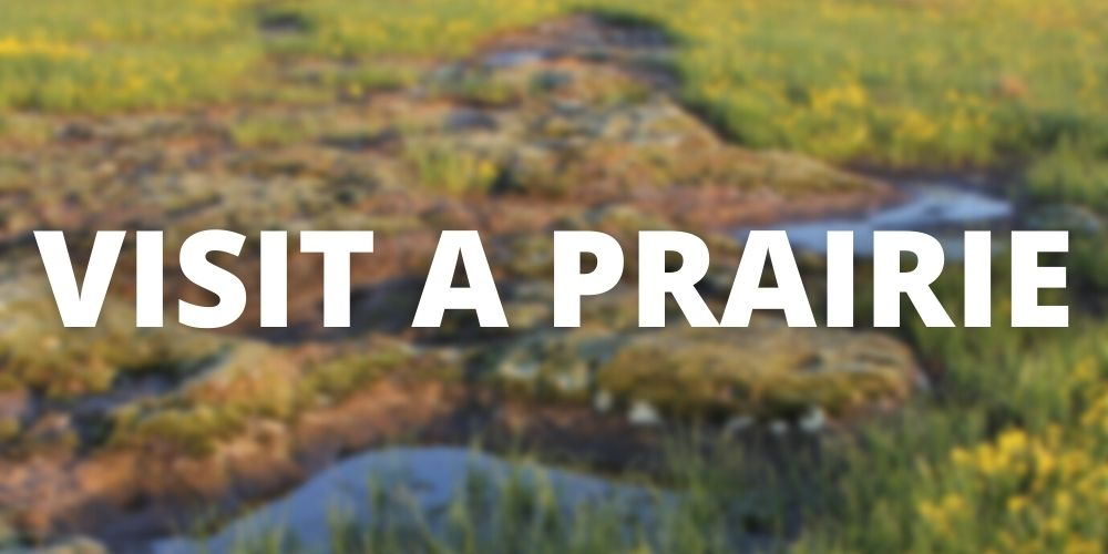 """Button for """"Visit a Prairie"""" with blurred rock outcroppings in the background"""