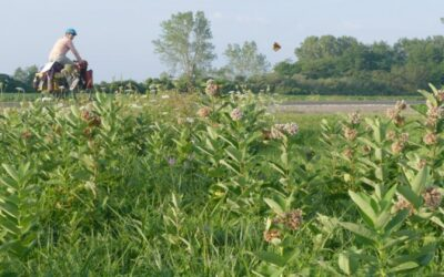 Author Who Biked the 10,000+ Mile Monarch Migration Route to Speak April 28
