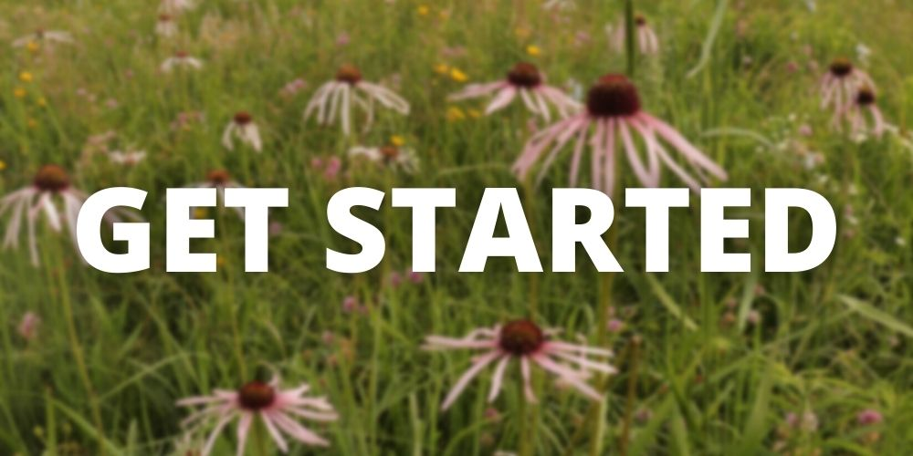 """Reads """"Get Started"""" with blurred photo of coneflowers in the background"""