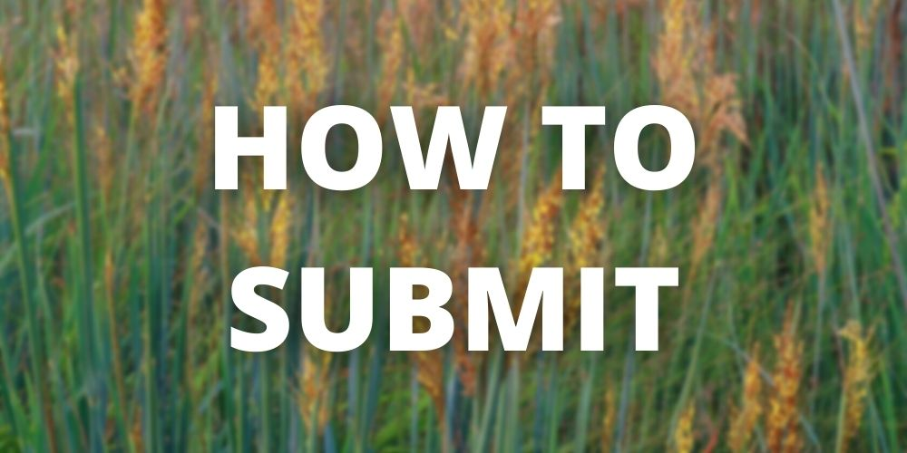 """Reads """"How to Submit"""" with blurred photo of grass in the background"""