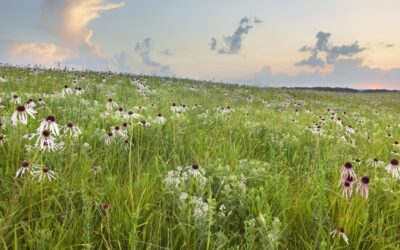 Protecting and Honoring Missouri's Prairie Heritage