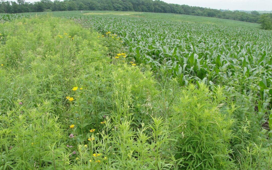 Prairie Strips Webinar July 21: Harnessing the Power of Prairie to Benefit Farms